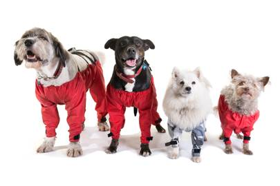 Red dog trousers