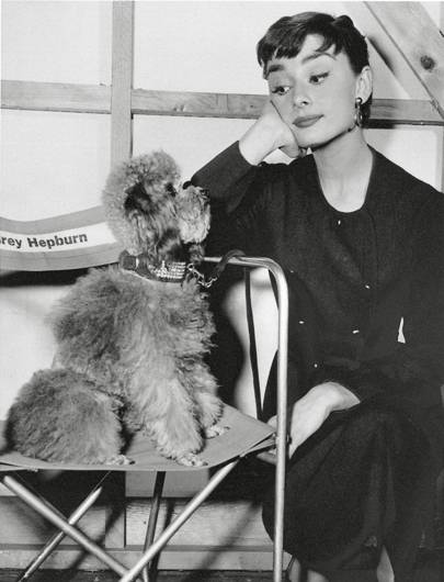 Audrey Hepburn by an unknown photographer, 1954