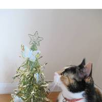 Tiny tree? Or massive cat?