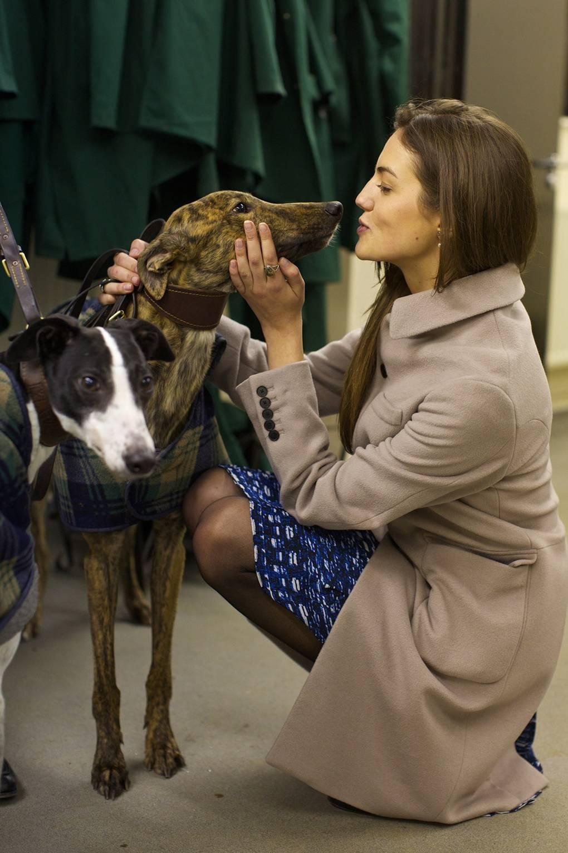 Towcester greyhound betting software irish 1000 guineas betting