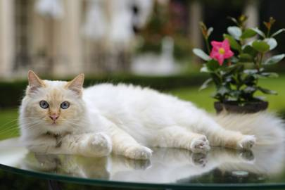 Is Lillibet of The Lanesborough Hotel now the coolest cat on the block?