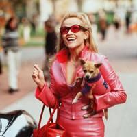 Legally Blonde, 2001