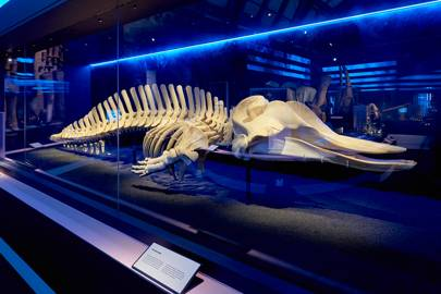 Whales: Beneath the Surface at the Natural History Museum