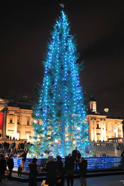 The Trafalgar Square Christmas tree