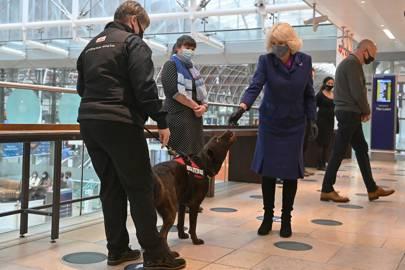 La duquesa de Cornwall acaricia a los perros mientras participan en una demostración de la organización benéfica Medical Detection Dogs.