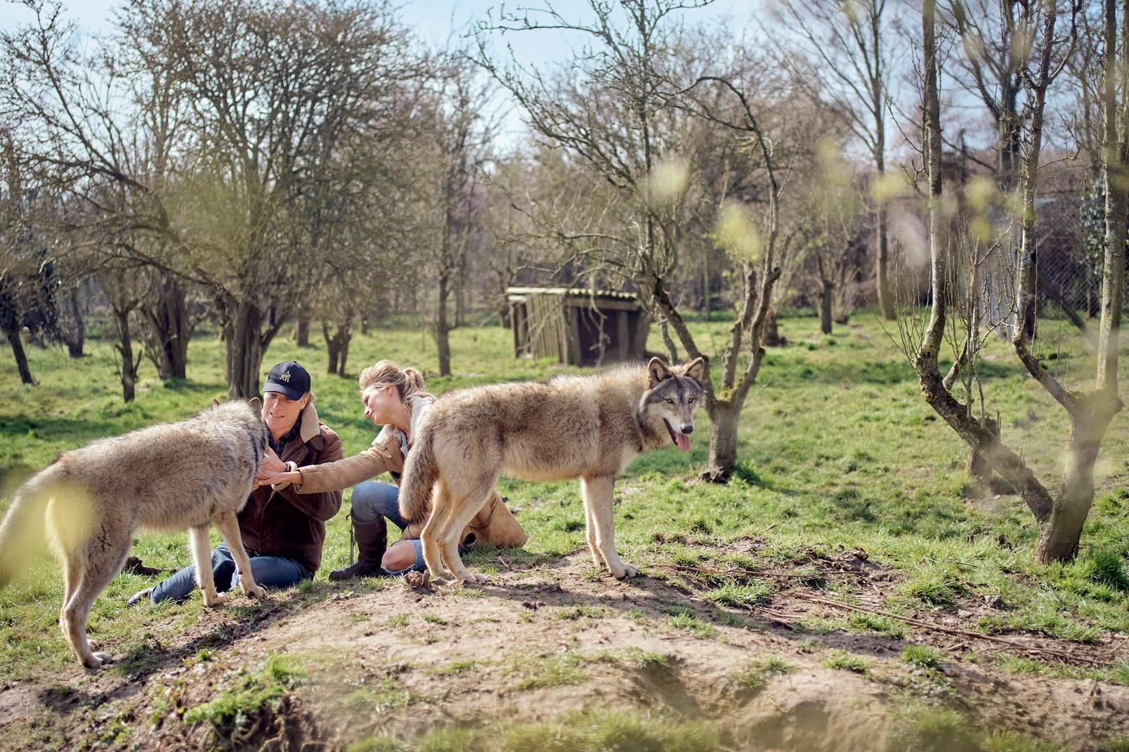 How saints with wild animals were friends