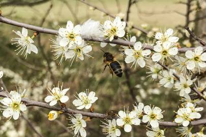 Leigh's Bees