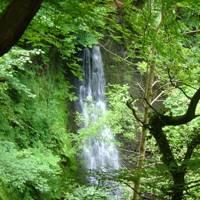 Falling Fosse Tea Garden