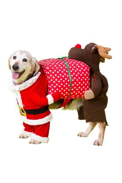 House of Paws Christmas Santa/Rudolph fancy-dress costume - Dog Christmas Outfits 2016 Tatler