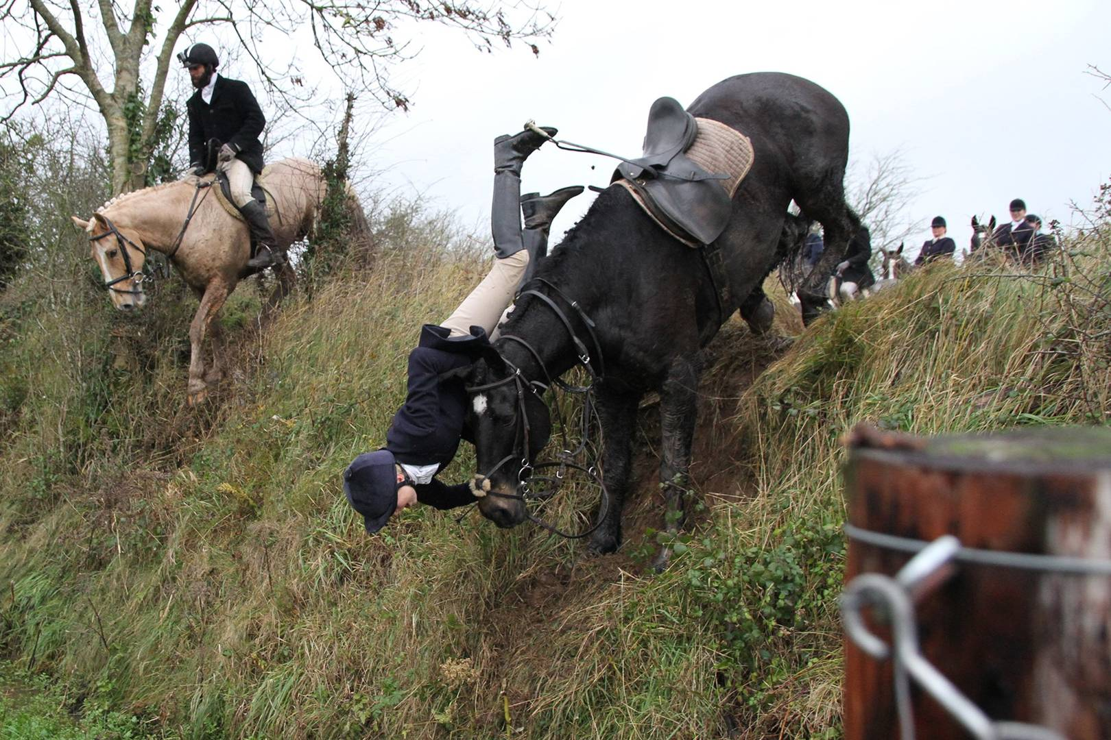 Hunted horses are shot
