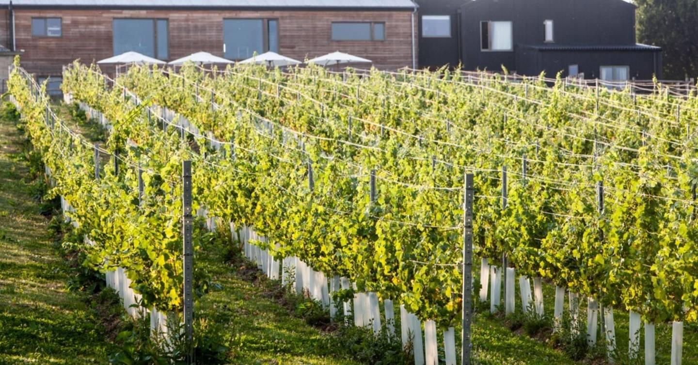 Bottoms up! The best vineyards to visit this English Wine week