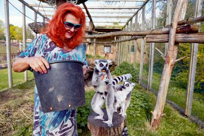 Lady McAlpine feeds the ring-tailed lemurs.