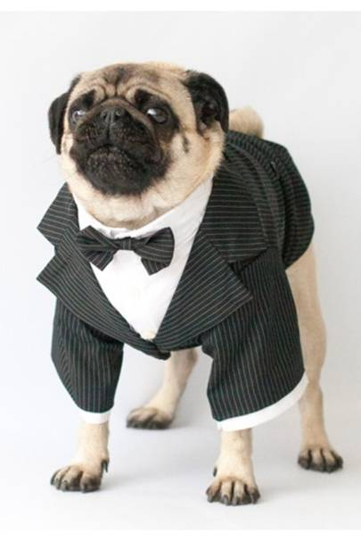 Christmas outfits for your dog - Dog Christmas Outfits 2016 Tatler