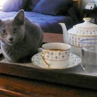 This little pussy has afternoon tea