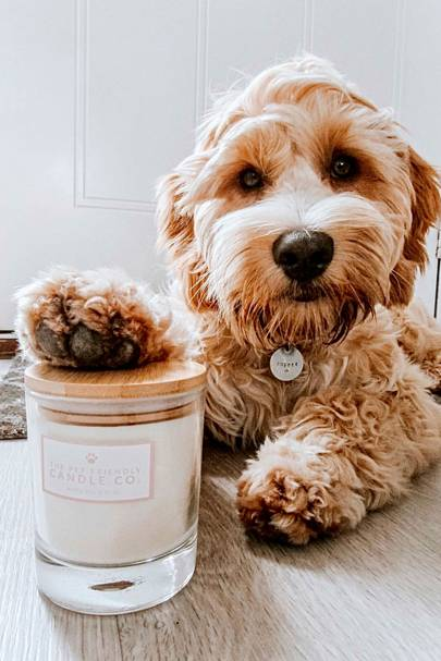 The Pet Friendly Candle Co