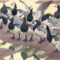 Second Nature: The Art of Charles Tunnicliffe