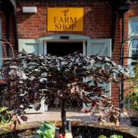 The Cowdray Farm Shop